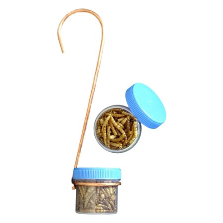 Single Hanging Bug DOTS Mealworm Bluebird Bird Feeder w/ Copper Hanger & 2 DOTS