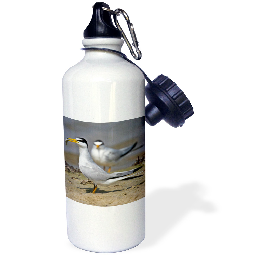 3dRose Least Tern bird with fish, Galveston, Texas, USA US44 LDI0579 Larry Ditto, Sports Water Bottle, 21oz by Supplier Generic