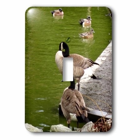 3dRose Canada Geese and Ducks on the River Single Toggle Switch lsp 18