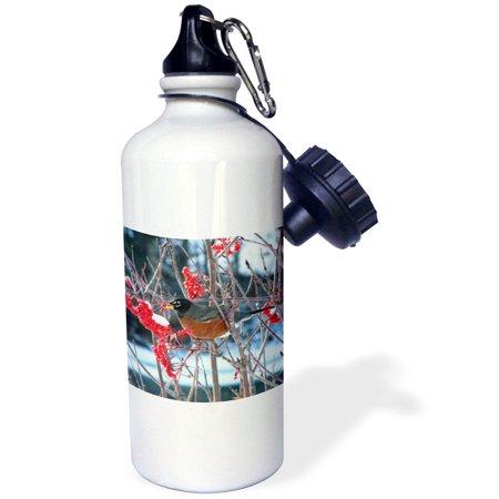 3dRose Robin in the Mountain Ash Tree 2, Sports Water Bottle, 21oz