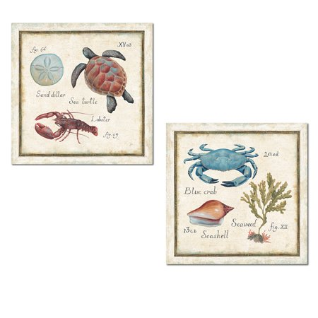 Oceanography | Nautical Sand Dollar, Blue Crab, Sea Weed, Turtle and Lobster Print Set; Coastal Decor by Daphne Brissonnet; Two 12x12in Poster Prints. Light Blue/Tan