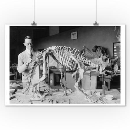 Fossil of a Baby Dinosaur Skeleton - Vintage Photograph (9x12 Art Print, Wall Decor Travel Poster) (Dinosaur Photos)