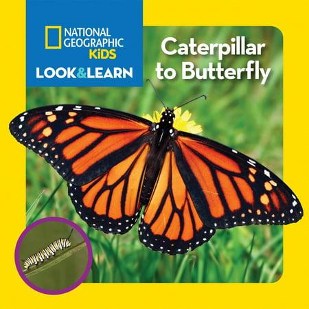 Caterpillar Bugs (Caterpillar to Butterfly (Board)