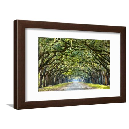 Savannah, Georgia, USA Oak Tree Lined Road at Historic Wormsloe Plantation Botanical Country Landscape Photography Framed Print Wall Art By (Country Road Glasses Frames)
