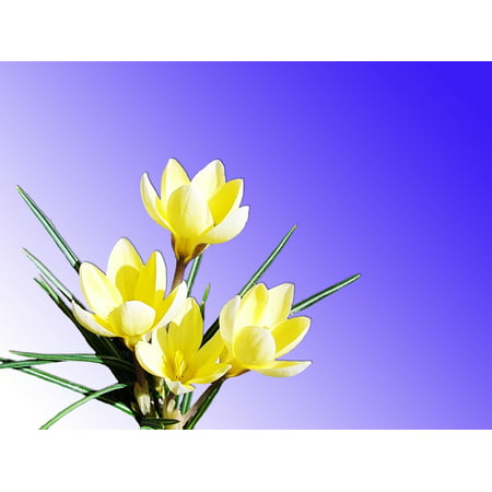 Flowers Bright Yellow Bloom Nature Spring Poster Print 24 x 36