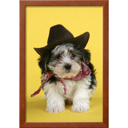 Lhasa Apso Cross Puppy (7 Weeks Old) in Cowboy Outfit Framed Photographic Print Wall Art