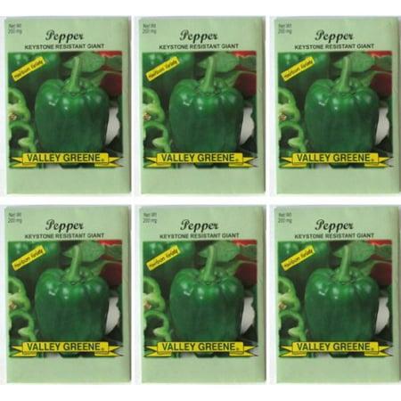Valley Greene (6 Pack) Heirloom Variety Keystone Resistant Giant Pepper Seeds 200 mg/package Non GE -