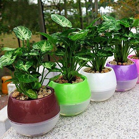 Self-Watering Flower Pots - Ensures Plants Take Enough Water for Days 5-Set