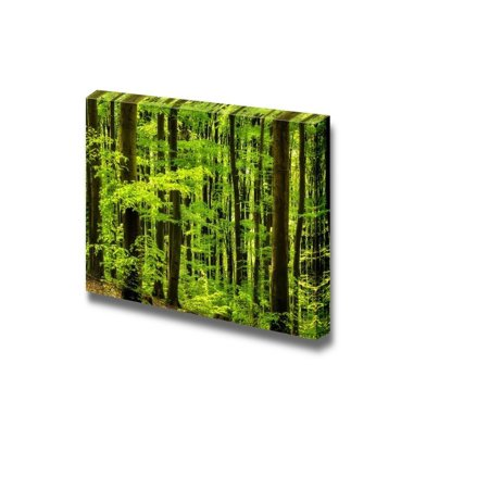 Canvas Prints Wall Art - Beautiful Beech Forest.Scenery of Trees/Woods | Modern Wall Decor/Home Decor Stretched Gallery Canvas Wraps Giclee Print & Ready to Hang - 32