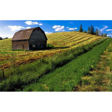 Posterazzi DPI1809603LARGE Old Barn in a Field Poster Print by Steve Nagy, 36 x 22 - Large - image 1 of 1