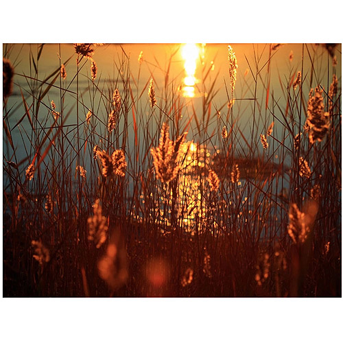 "Trademark Fine Art ""Summer Nights"" Canvas Art by Beata Czyzowska"