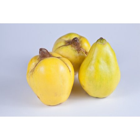 Canvas Print Fruit Quince Fruits Pome Fruit Quince Fruit Yellow Stretched Canvas 10 x 14