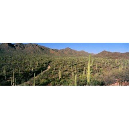 Images panoramiques PPI43946L Parc national de Saguaro Arizona Etats-Unis d'affiche par images panoramiques - 36 x 12 - image 1 de 1