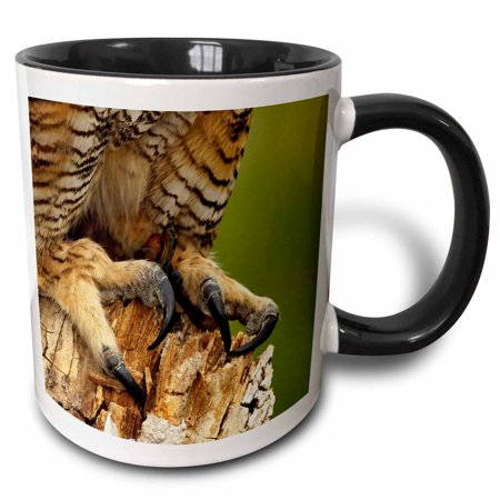 3dRose Talons of Great Horned Owl, Bubo virginianus, Captive - NA02 AJE0374 - Adam Jones - Two Tone Black Mug, (Rose Of Jericho Adam K & Soha Remix)