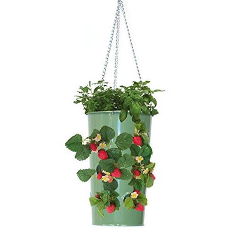 Hanging Strawberry Planter - houston international trading 8395e ag enameled galvanized hanging strawberry, floral planter - applegreen