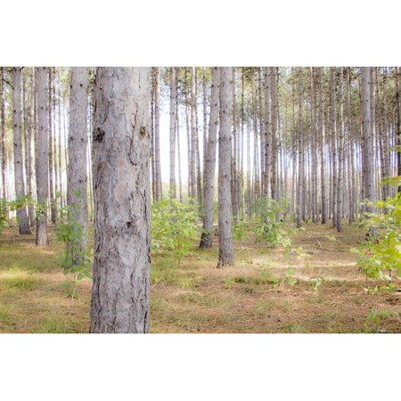 Millwood Pines 'In These Woods' Graphic Art Print on Wrapped Canvas ()