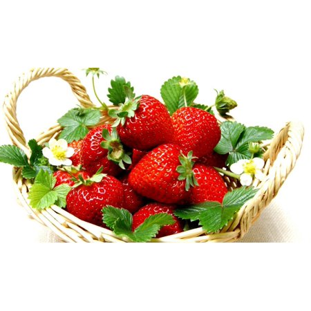 Everbearing Ozark Beauty Strawberry Plants 20 Bare Root Plants - TOP -
