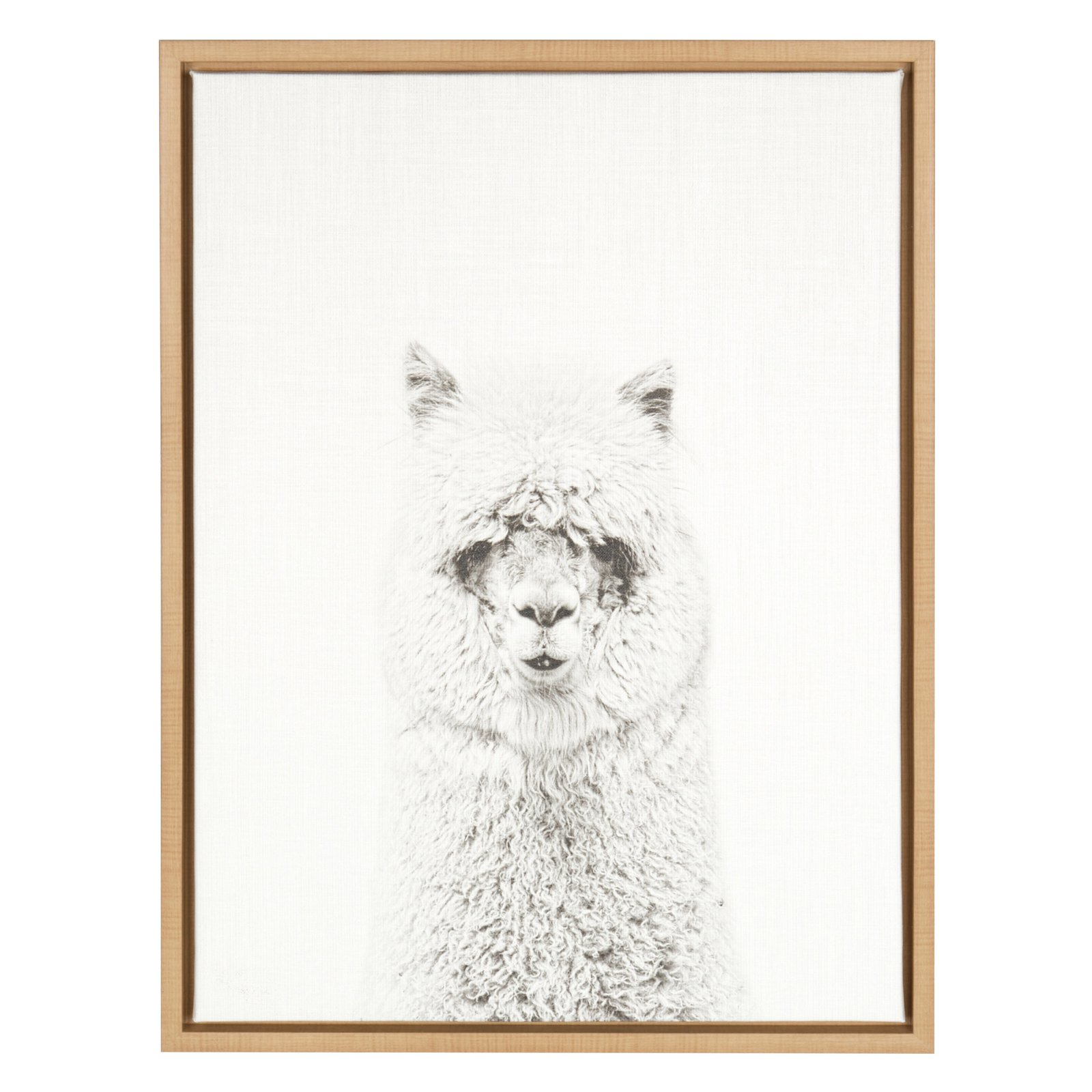 Design Ovation Sylvie Hairy Alpaca Black And White Portrait Canvas Wall Art By Simon Te Tai by Design Ovation