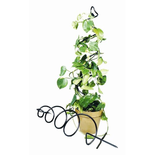 Achla Designs Spiral 3.5-ft. Iron Plant Trellis by ACHLA DESIGNS
