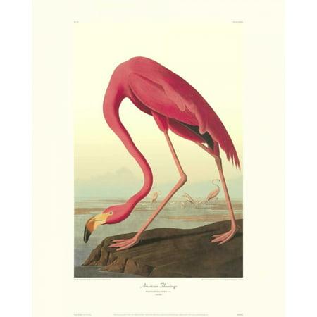 American Flamingo Poster Print by John James (James S Flamingo)