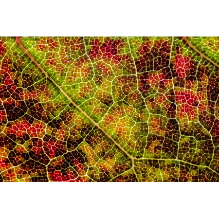 LAMINATED POSTER Autumn Fall Texture Leaf Poster Print 24 x 36