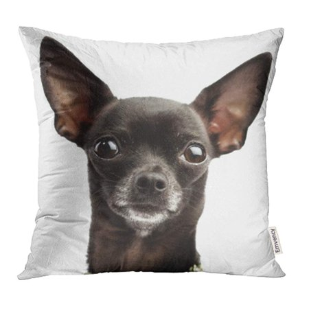 YWOTA Red Dog Funny Black Chihuahua Animal Portrait Face Head Eyes Pet Close Pillow Cases Cushion Cover 16x16 inch - Red Eye Funny