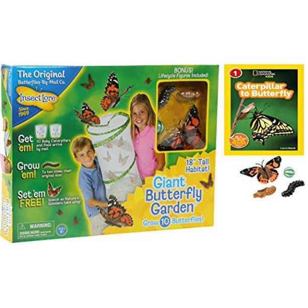 Insect Lore Live Butterfly Garden Kit National Geographic