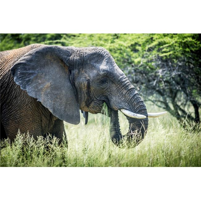 Elephant Elephantidae Feeding at Dinokeng Game Reserve - South Africa Poster Print - 38 x 24 in. - Large - image 1 of 1