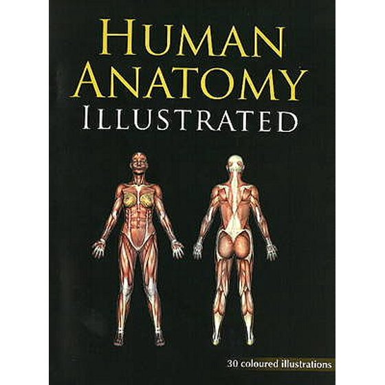 Human Anatomy Illustrated Walmart