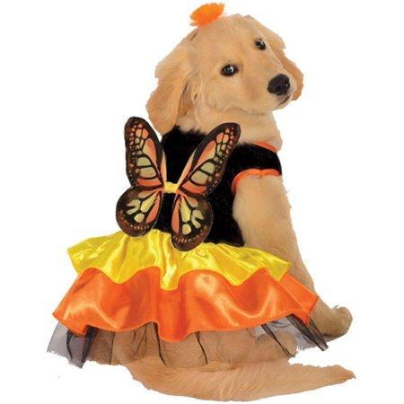 Butterfly Pet Halloween - Baby Butterfly Halloween Costume