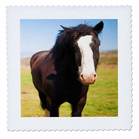 3dRose A Beautiful Black and White Horse Standing on a Green Field of Grass Close Up with White on Face - Quilt Square, 10 by - Light Up Horse