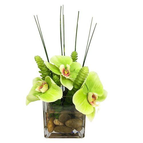 Bloomsbury Market Phalaenopsis Orchid Succulents Floral Arrangement in Glass Vase