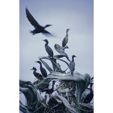 Cormorants Fly Above Driftwood Grey Sky Galiano Island Bc Canvas Art - Leanna Rathkelly  Design Pics (22 x 34) Dots Grey Design