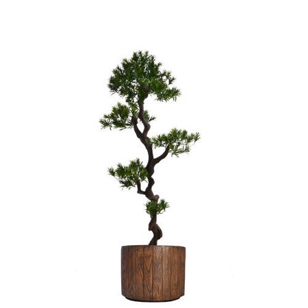 Laura Ashley Home Tall Yacca Tree in Planter ()