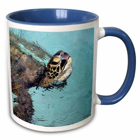 Rose Skilpadde Pasific Green Turtle Hawaiian Sea Name Is Honu