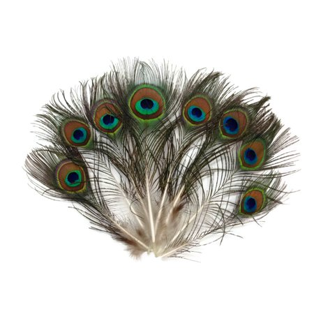 Peacock Feather Costume Tail (10 Pieces - Mini Natural Peacock Tail Body)