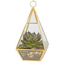 Glass Terrarium, Succulent & Air Plant (Pyramid)