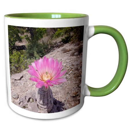 2 Ounce Cactus Green (3dRose Lace Cactus succulent flower, Texas - NA02 RNU0174 - Rolf Nussbaumer - Two Tone Green Mug, 11-ounce )