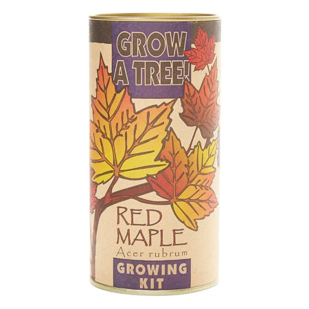 Red Maple | Tree Seed Grow Kit | The Jonsteen