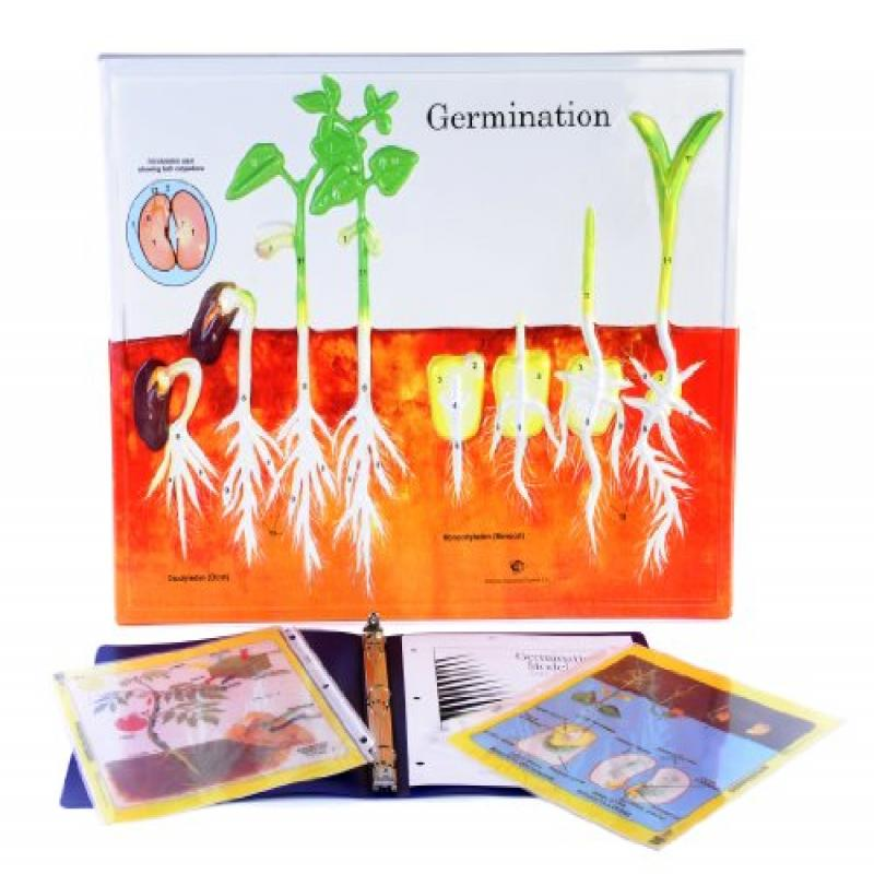 Hubbard Scientific 2850 Germination Model Activity Set