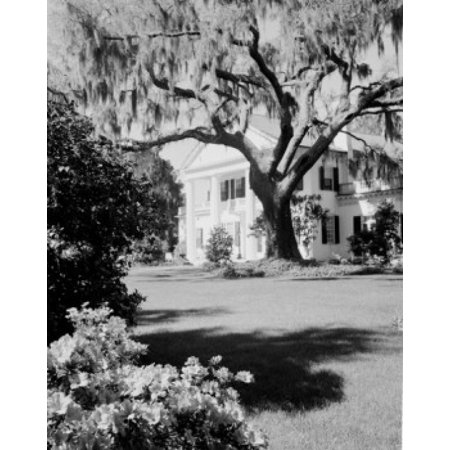 USA North Carolina Wilmington Orton Plantation Home with large live Oak and Spanish moss Stretched Canvas -  (24 x 36)