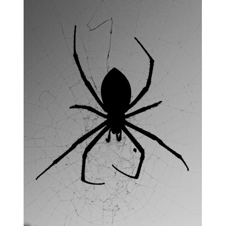Canvas Print B W Web Against The Light Spider Silhouette Stretched Canvas 10 x 14](Spider Web Lights)