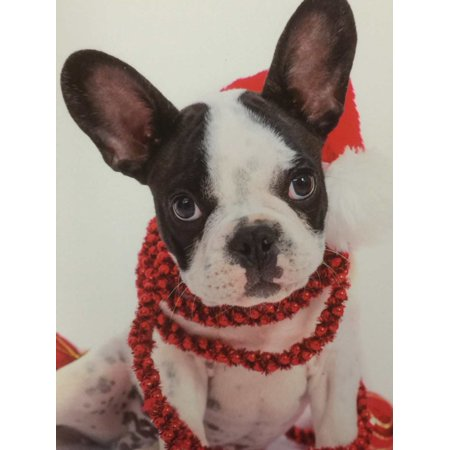 Trimmerry Festive Boston Terrier Christmas Cards Dog in Santa Hat - Graduation Hat Card Box