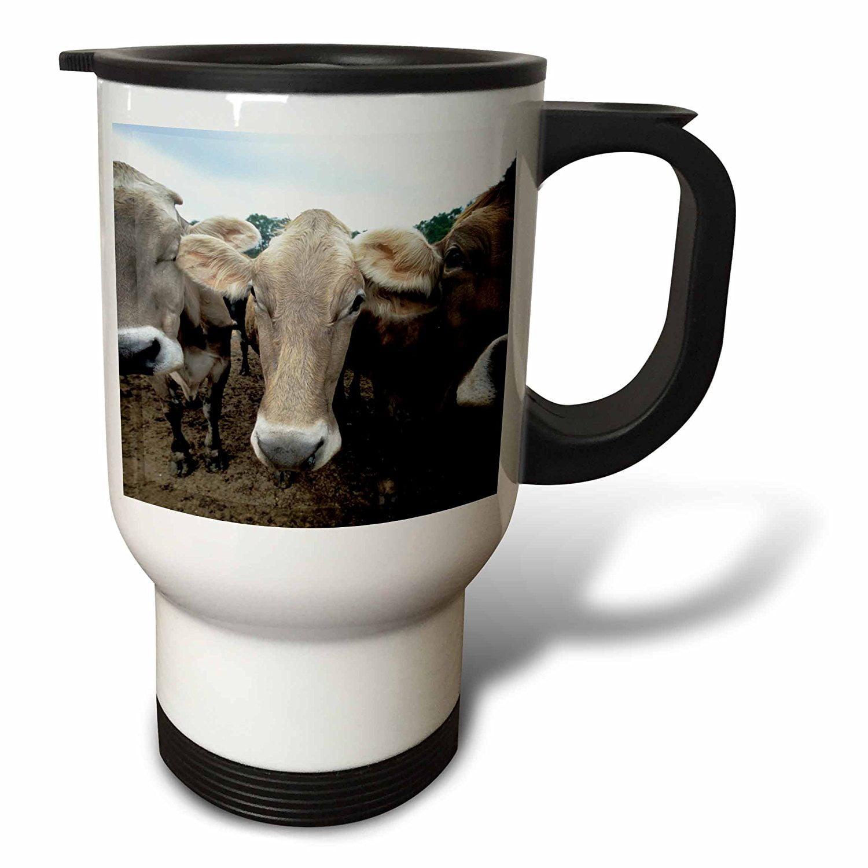 3dRose Jersey cows, Hurd Farm, Hampton, NH - US30 JMO0597 - Jerry and Marcy Monkman, Travel Mug, 14oz, Stainless Steel
