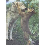 "Gray Wolf Playful Pup Garden Flag Decorative Wildlife  12.5"" X 18"""