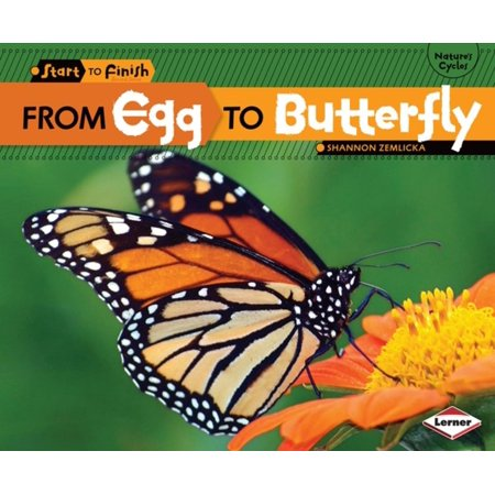From Egg to Butterfly - eBook