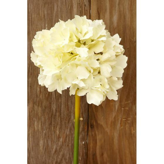 Ivory white silk hydrangea flowers 14in tall flower head 6in ivory white silk hydrangea flowers 14in tall flower head 6in wide mightylinksfo Gallery