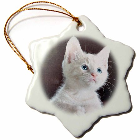 Snowflake Cat - 3dRose Adorable white kitten with blue eyes. Domestic cat. White, Snowflake Ornament, Porcelain, 3-inch