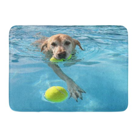 SIDONKU Yellow Labrador Dog at Local Public Pool Blue Summer Lab Ball Best Doormat Floor Rug Bath Mat 23.6x15.7