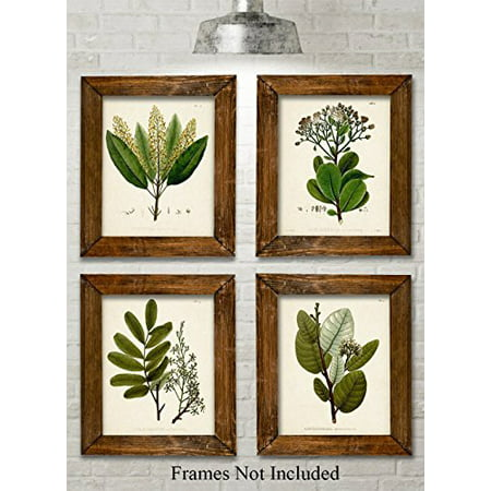 4 Botanical Prints (Green Botanical Art Prints - Set of Four Prints (8x10) Unframed - Great Kitchen Decor and Gift for Nature Lovers)
